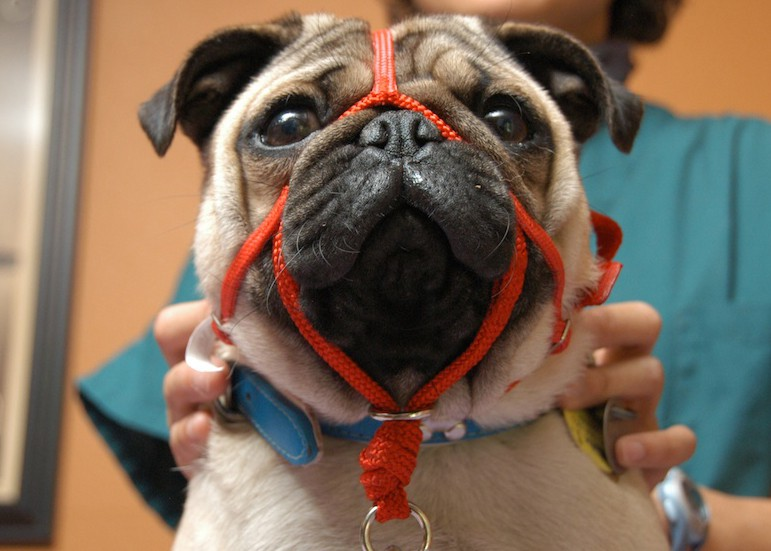 Как сделать намордник для собаки видео