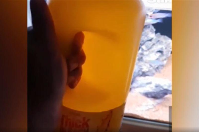Девушка вылила отбеливатель в аквариум бывшего парня и попала под суд