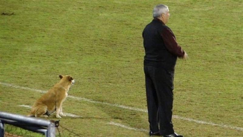 Тренером футбольного клуба в Парагвае стала собака