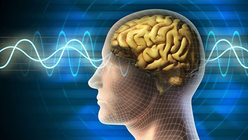 Учёные научились регулировать уровень храбрости в мозге
