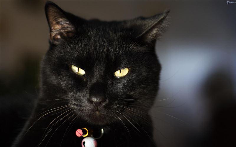 В Италии монахиня попала в аварию из-за чёрного кота