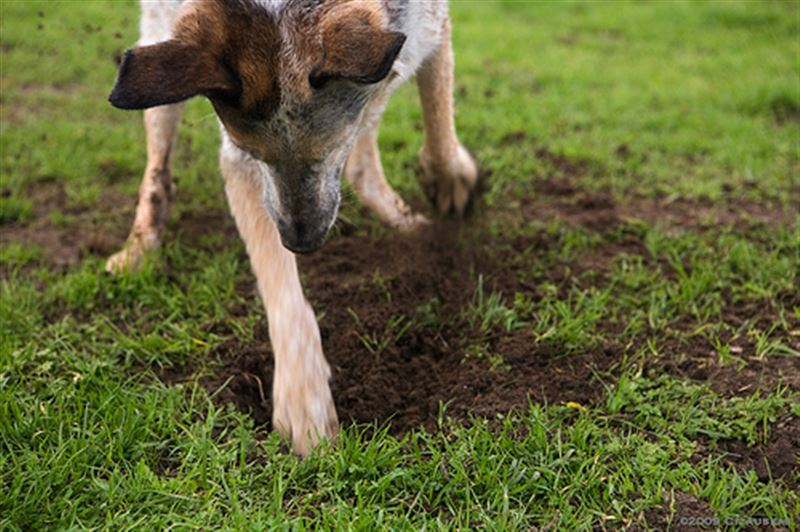 Собака в чешской деревне откопала клад бронзового века
