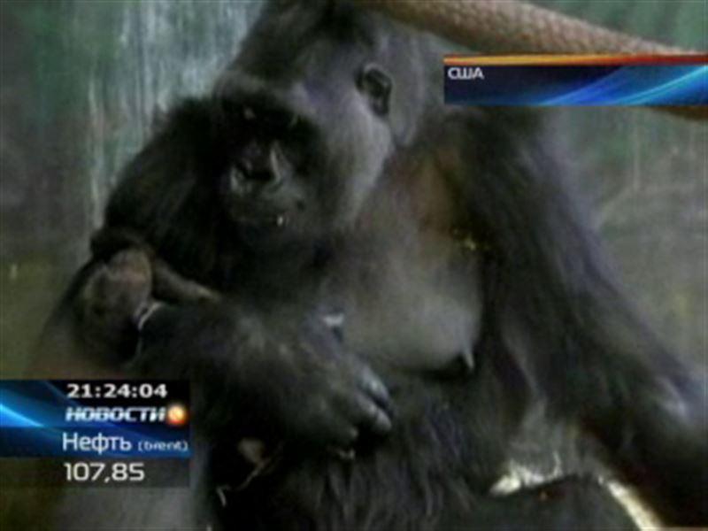 В чикагском зоопарке аншлаг