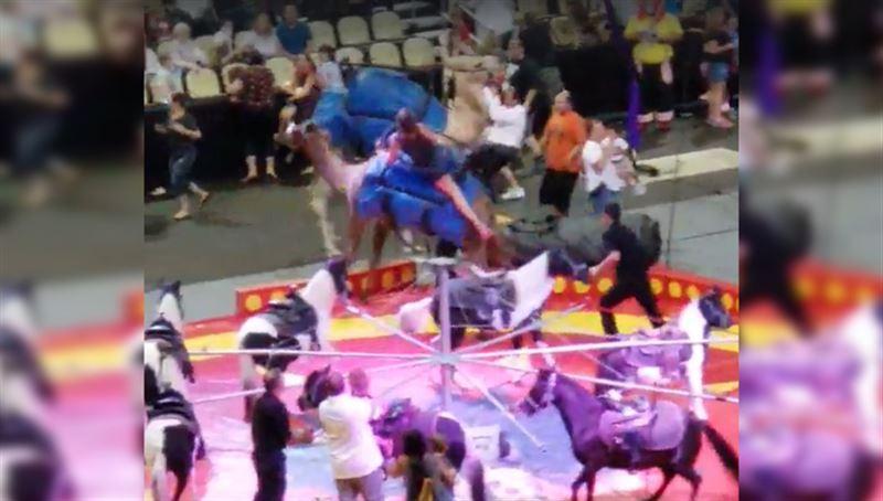 Взбесившийся цирковой верблюд поранил шестерых детей