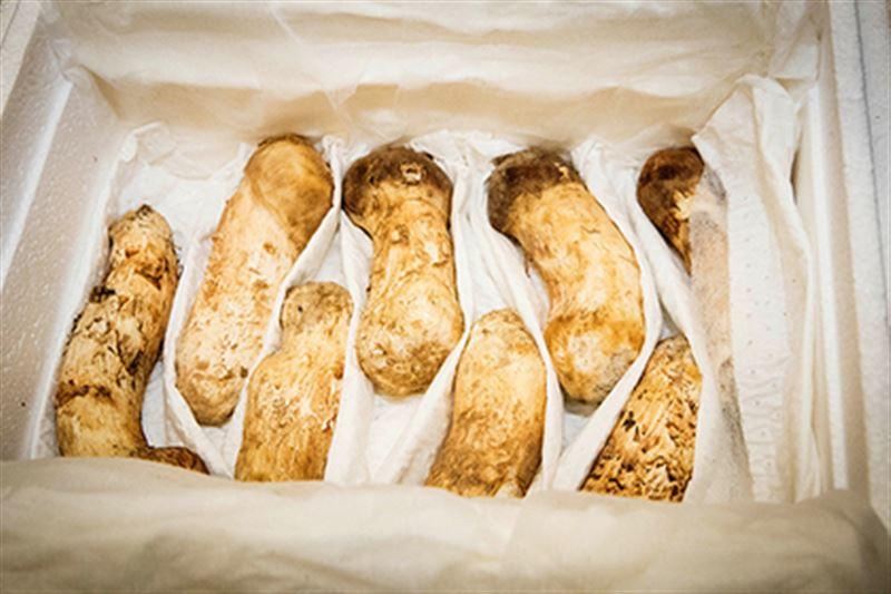 Две тонны грибов подарил Кин Чен Ын лидеру Южной Кореи