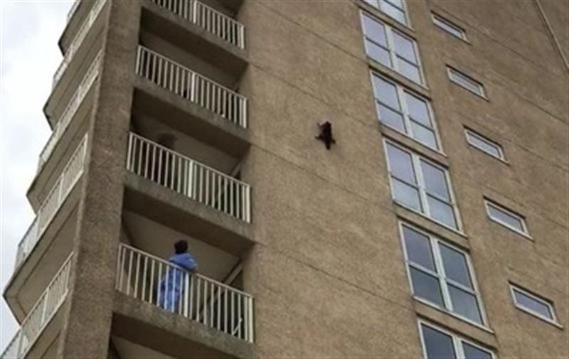 Карабкавшийся по зданию енот сорвался с девятого этажа и выжил