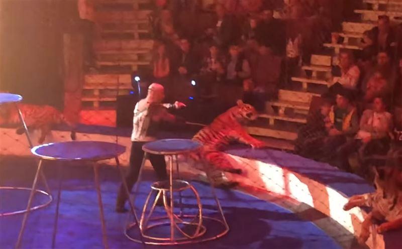 В цирке у тигра случился приступ во время выступления