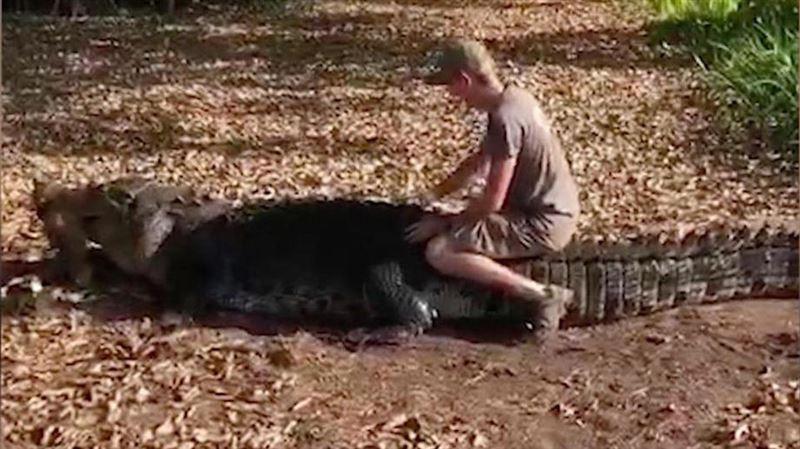 Пятиметрового крокодила оседлал датский турист вАвстралии