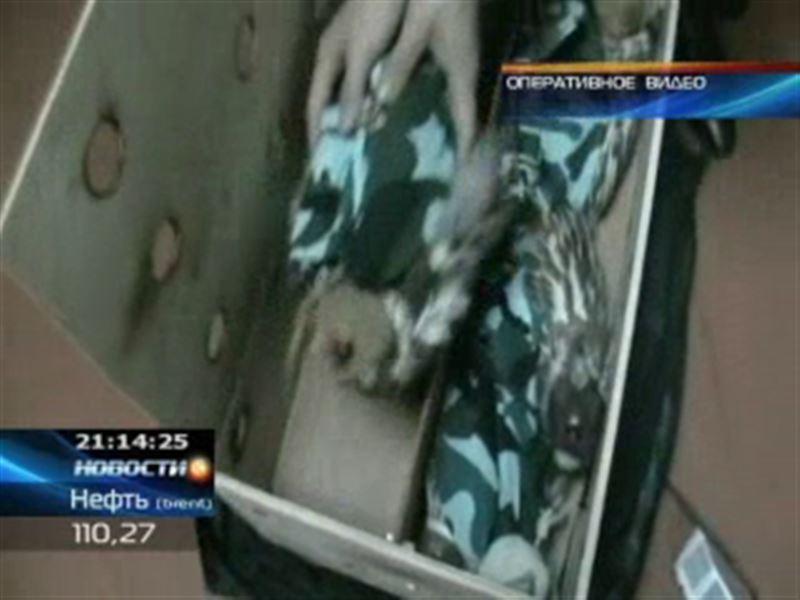 Казахстанский контрабандист пытался вывезти из страны 11 соколов-балобанов
