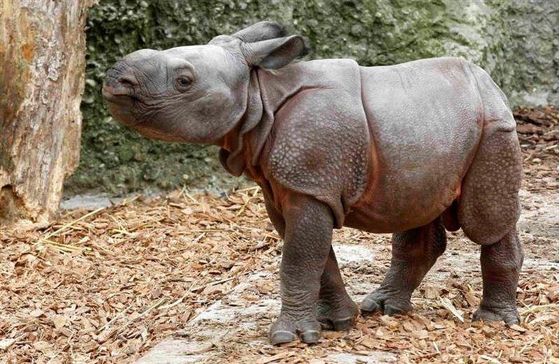 Детеныш носорога укусил туриста за палец