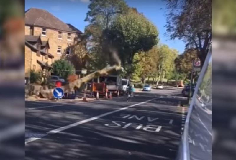 На велосипедиста едва не рухнуло дерево в Лондоне