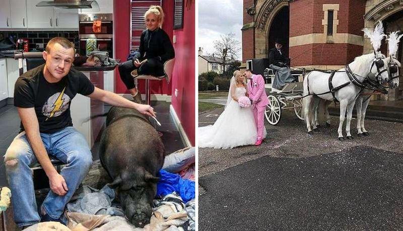 Жених ушёл с собственной свадьбы, променяв невесту на 200-килограммовую свинью