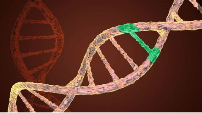 Ученые впервые отредактировали ДНК эмбриона в утробе матери
