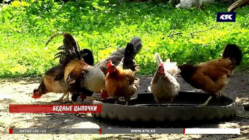 Курятина и яйца из Казахстана  под запретом в Кыргызстане