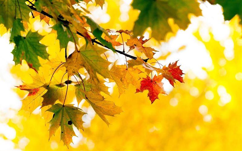 Какой будет погода в Казахстане 11 октября
