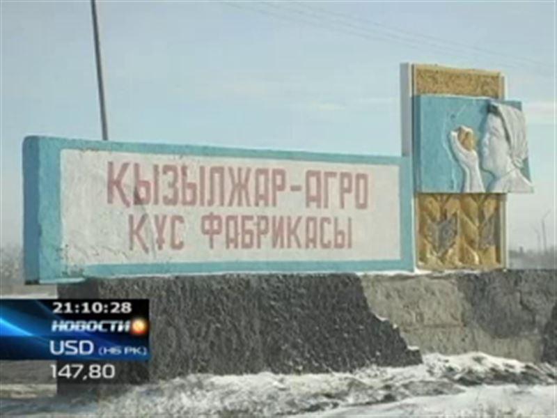 После масштабной акции протеста работникам кызылжарской птицефабрики начали выдавать зарплату
