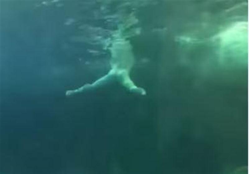 Ер адам акулалар жүрген аквариумға секіріп кеткен