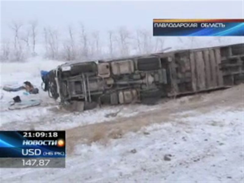 В Павлодарской области перевернулся грузовик с племенными коровами