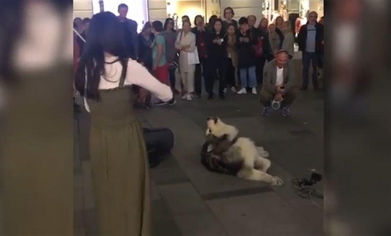 Собака, «подпевающая» уличной скрипачке, стала звездой Сети