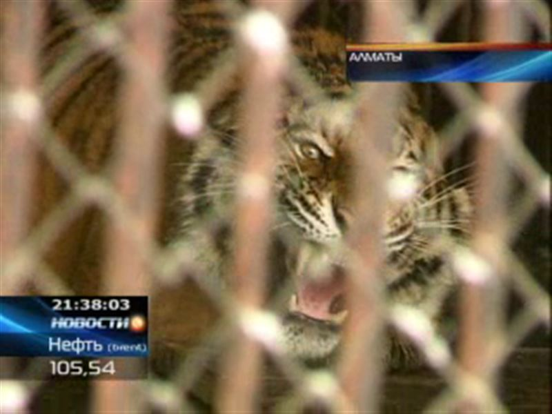В Алматинском зоопарке появились новоселы