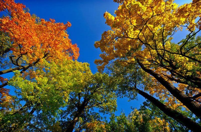 Какая погода будет в Казахстане в среду 24 октября