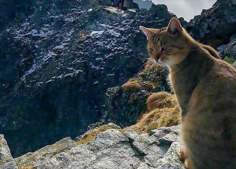 Альпинист встретил домашнего кота на самой высокой польской горе