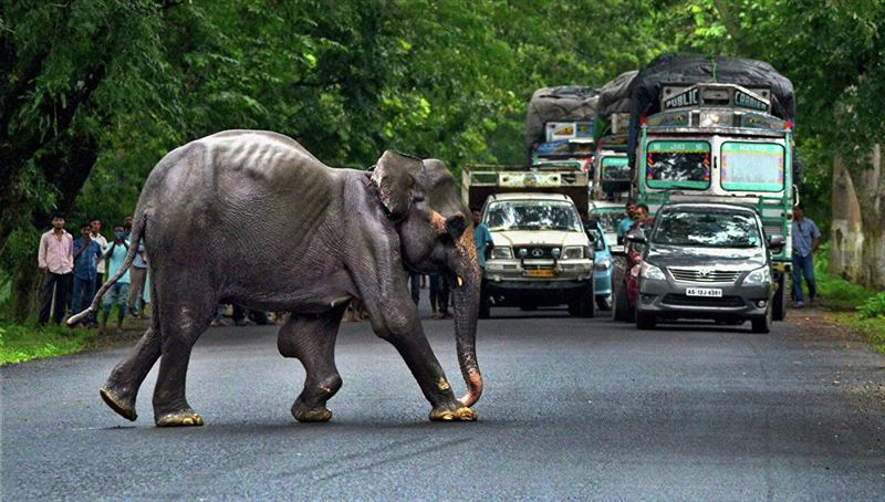Слон в Индии напал на автомобиль с туристами