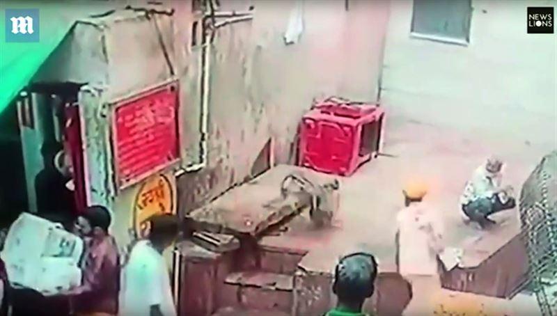 В Индии обезьяна украла змею у заклинателя