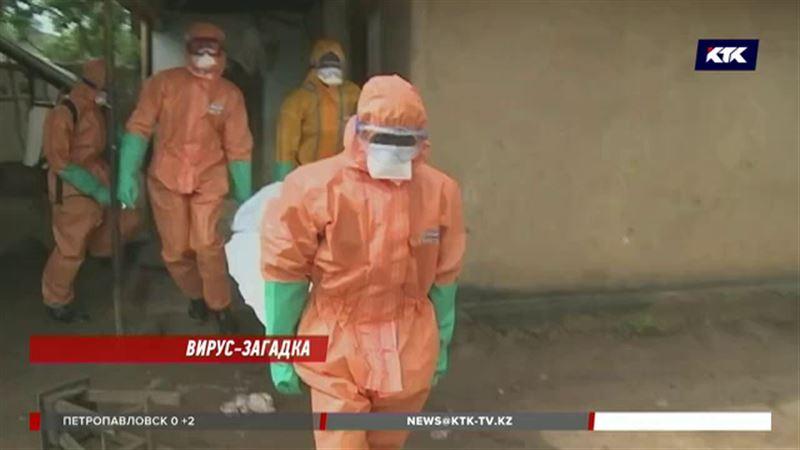 Казахстанцам угрожает новый африканский вирус