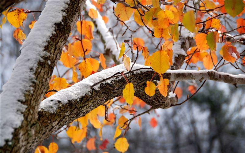 Прогноз погоды по Казахстану на 2 ноября