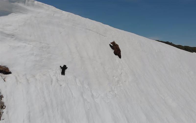 Медвежонок сорвался в пропасть, пытаясь добраться до мамы