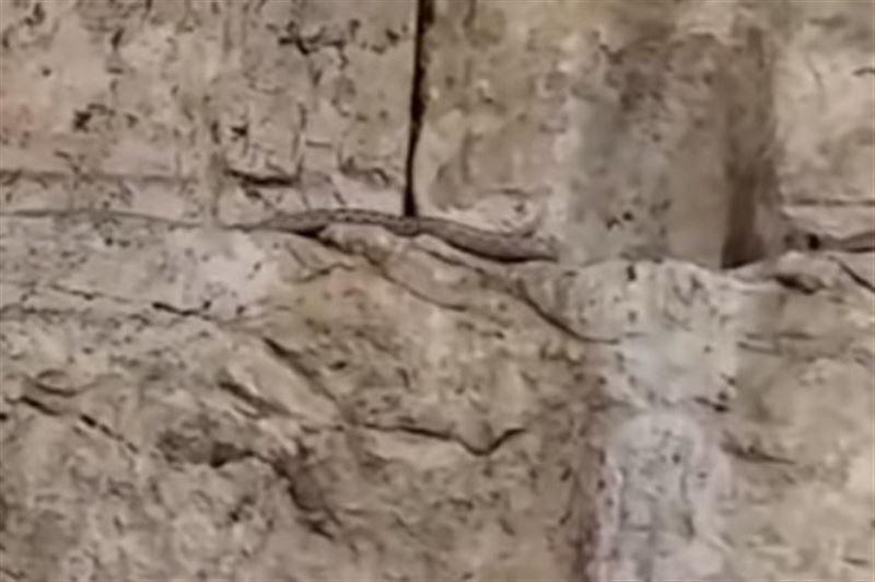 Знак Апокалипсиса: на Стену Плача заползла змея и напугала верующих