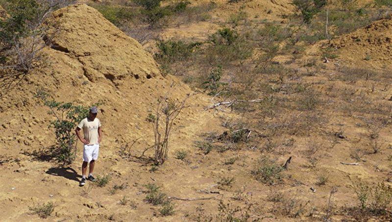 В Бразилии обнаружили термитники, которые видны из космоса