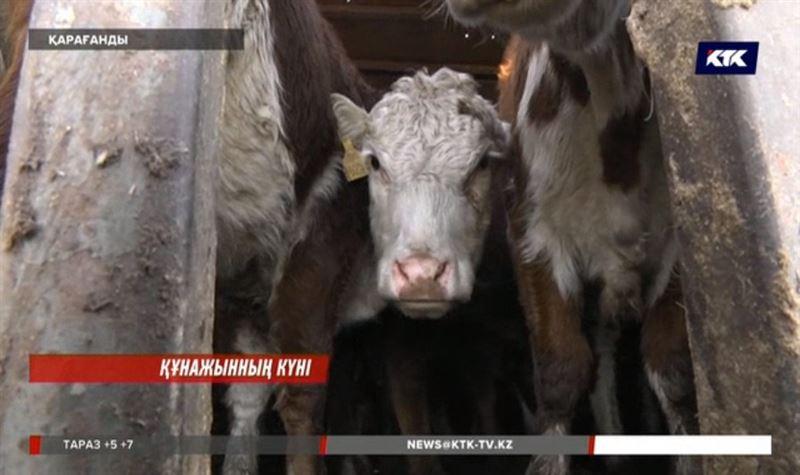 Қарағанды облысында асыл тұқымды мал сатып алған кәсіпкерлер мол шығынға батқалы тұр
