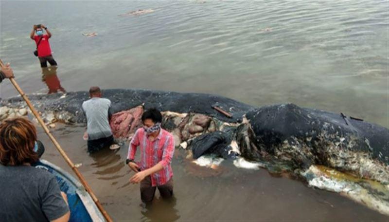 В желудке мертвого кита обнаружили 6 килограммов пластика