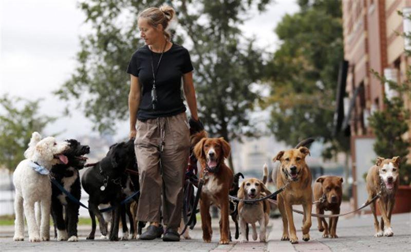 Необходимы единые правила выгула собак и кошек, считает депутат