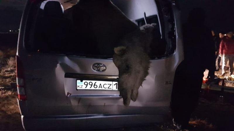 Верблюд стал причиной смертельной аварии на трассе Актау – Жетыбай