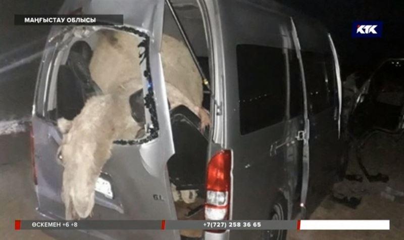 Маңғыстауда автобус түйеге соғысып бір адам қаза тапты