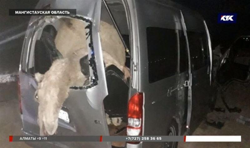 Верблюд в ДТП погубил 19-летнего пассажира