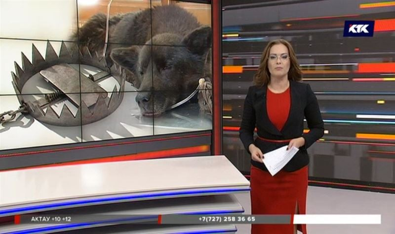 Защитники животных ищут петропавловца, который расставил по городу капканы