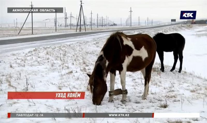 В Акмолинской области исчезли 200 лошадей, табунщик тоже