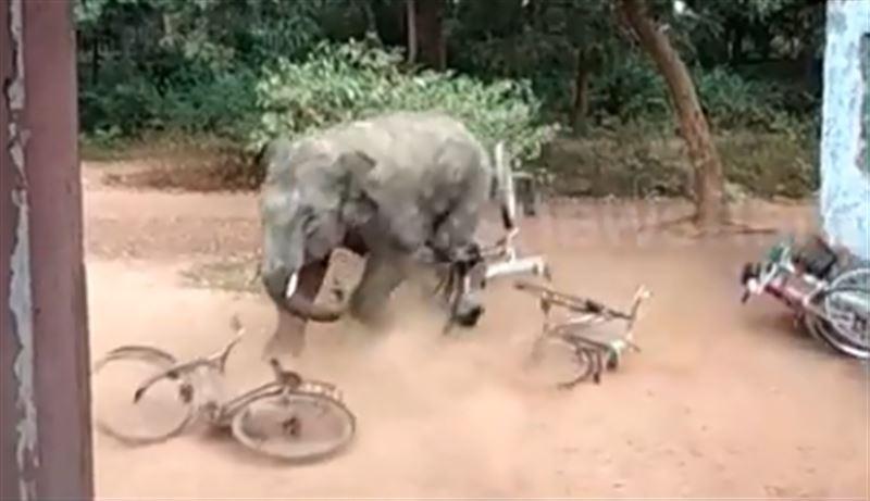 Буйный слон устроил переполох в деревне в Индии