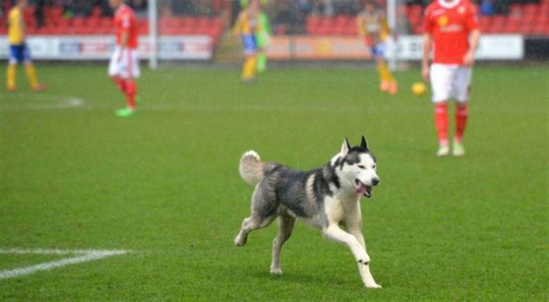 В Аргентине собака спасла команду от гола после удара по пустым воротам
