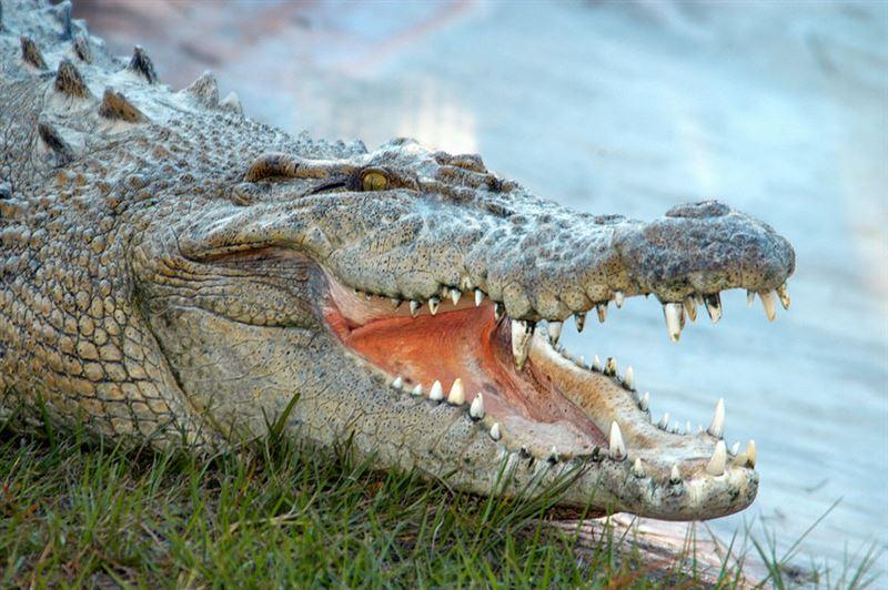 Турист спас пожилого мужчину, на которого напал аллигатор