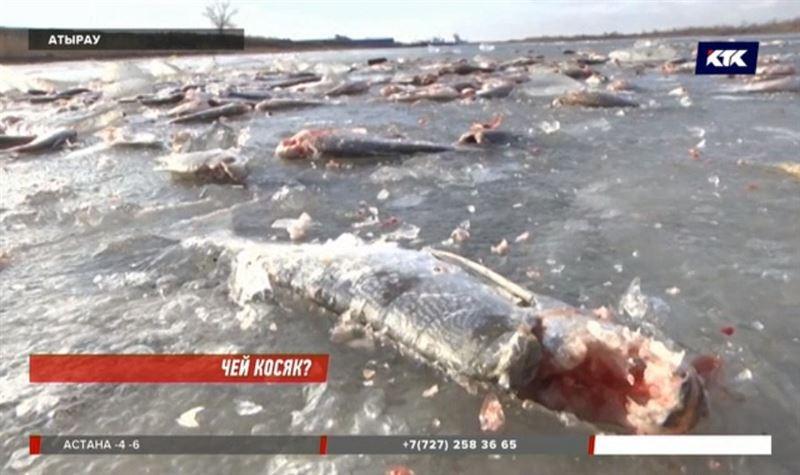 Побережье Урала усыпано мертвой рыбой