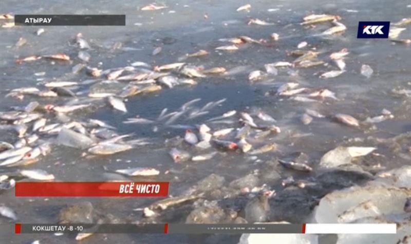 Рыба в Урале гибнет не из-за отравленной воды