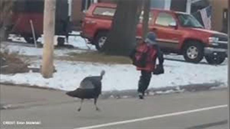 В США очевидцы сняли на видео, как индейка напала на школьника