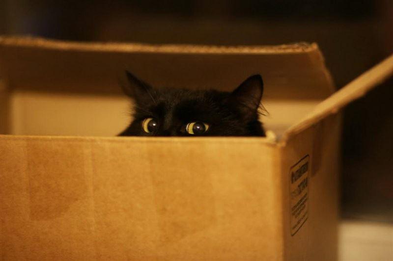 Жительница Канады отправила по почте кота