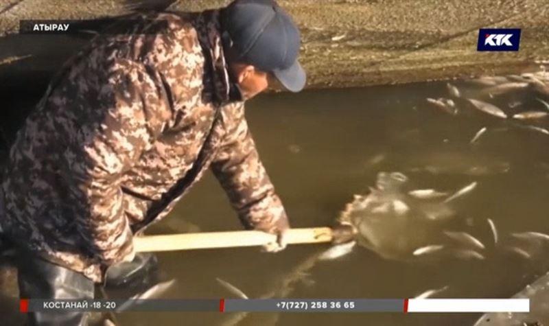 Новые факты гибели рыбы в Атырау