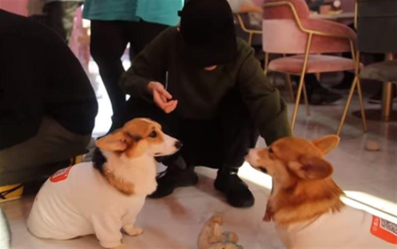 В кафе в Шанхае посетителей обслуживают собаки